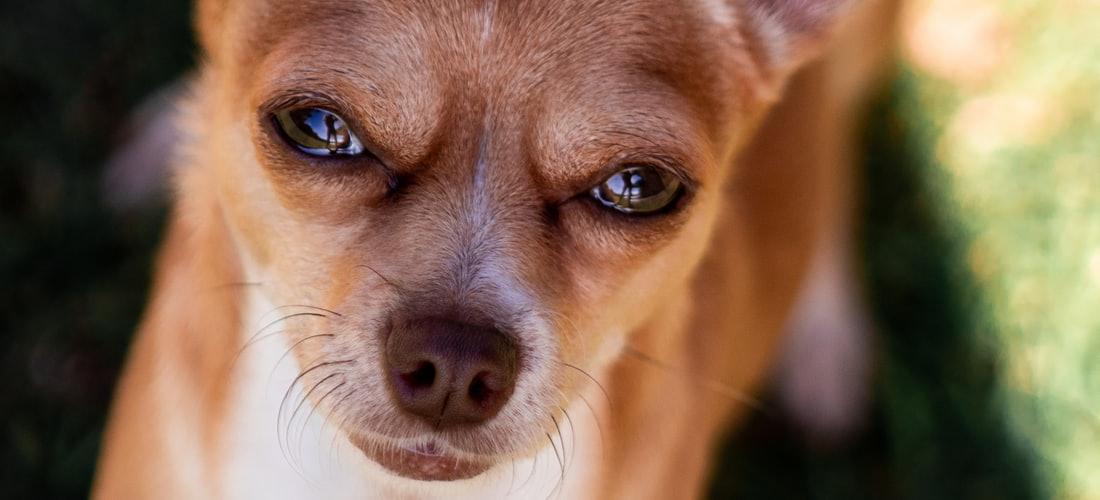 Actualidad: La Importancia del Cuidado de los Perros