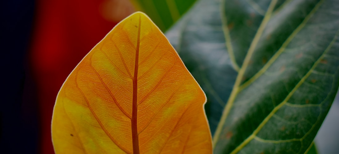 Estética: Como Quitar las Varices Naturalmente