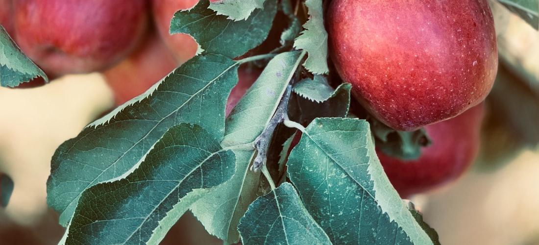 Tecnología e Información: En Septiembre Comienza el Programa de Renovación de Iphone de Apple