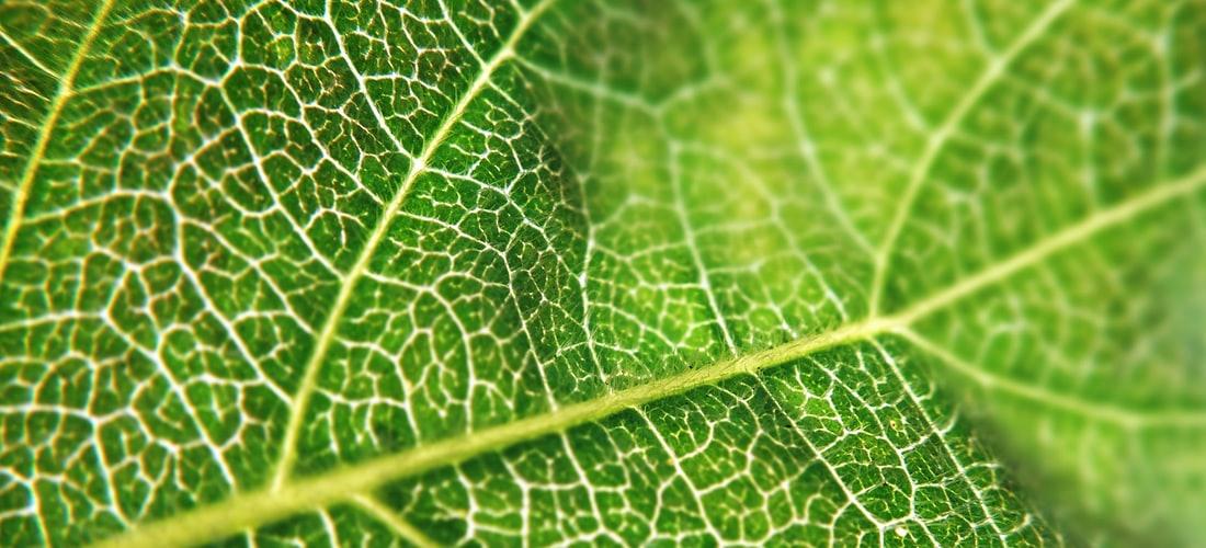 Estética: Medicina Natural para las Varices: Vinagre de Manzana