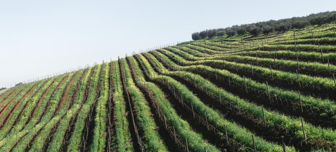 Destinos Turísticos: El Gurú de los Vinos Robert Parker Jr Destaca de Nuevo la Calidad de Oro de Castilla