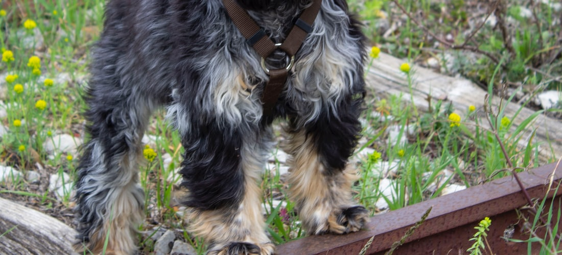 Cuidado de Animales: Como Educar a un Perro Facilmente, Sin Necesidad de Castigarlo. Consejos Practicos