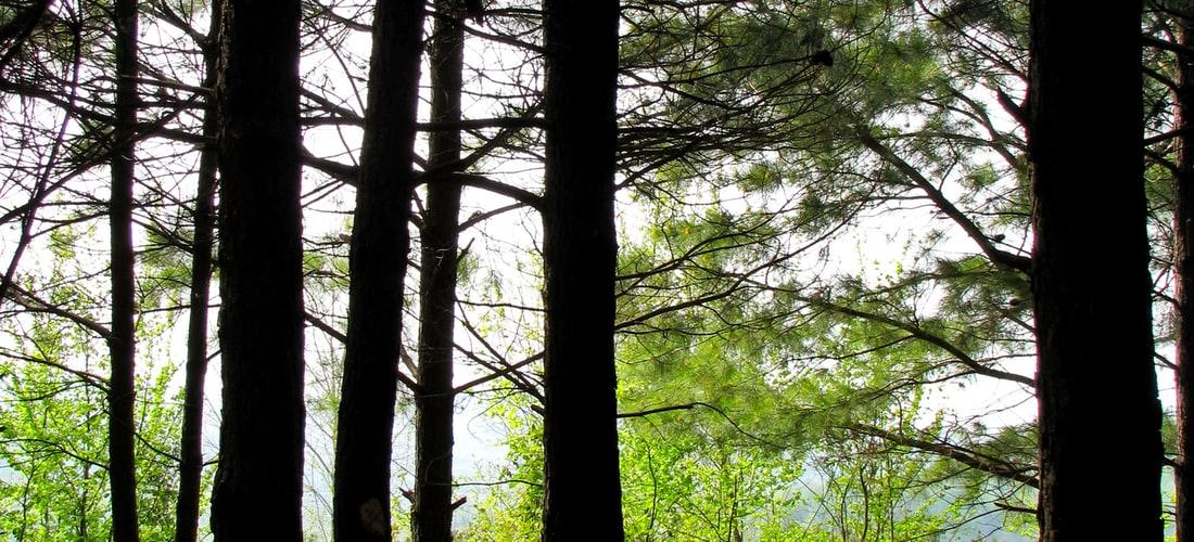 Destinos Turísticos: Saha Forest Camp: el Nuevo Destino Turístico de Analamanga  Madagascar