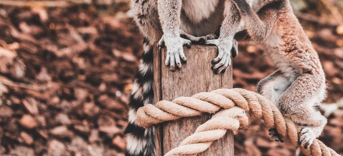 Destinos Turísticos: Inauguración de un Nuevo Eco-lodge en el Turismo en la Comunidad Sambirano Madagascar