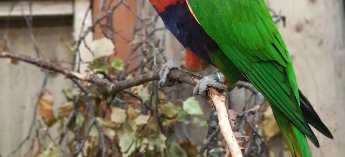 Cuidado de Animales: Loros del Amazonas. Características y Cuidados