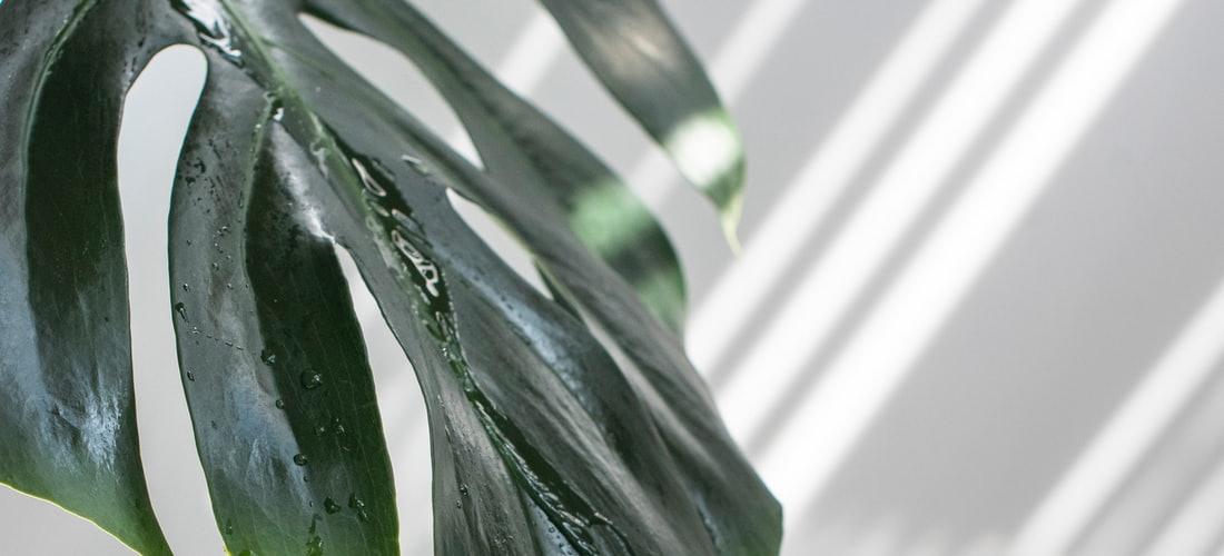 Administración y Negocios: Piscinas: Optando por la Fibra de Vidrio
