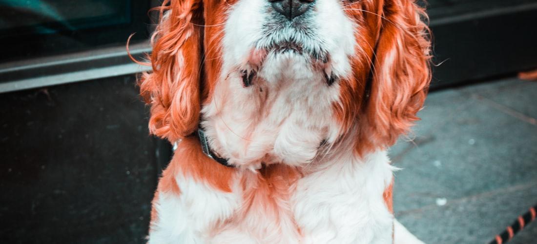 Actualidad: Las Buenas Guarderías para Perros en Madrid