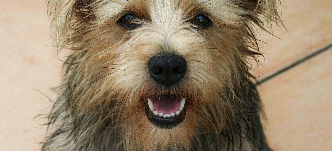 Convivencia con Mascotas: Beneficios de la cremación de mascotas