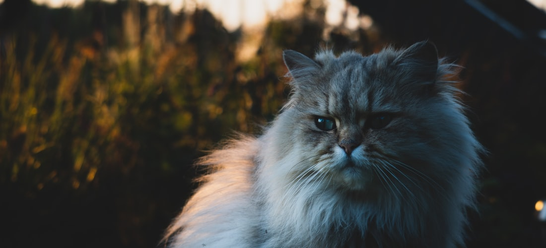 Rascadores para gatos: ¿Cuál es su función?