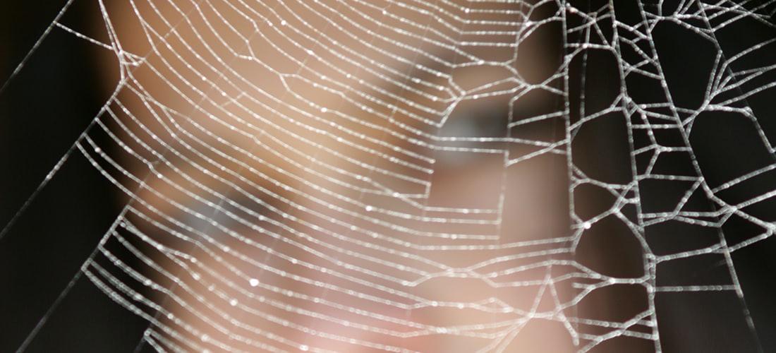 Hosting: Alojamiento Web Linux: una Visión Comparativa del Servidor de Alojamiento Web Con los Demás.