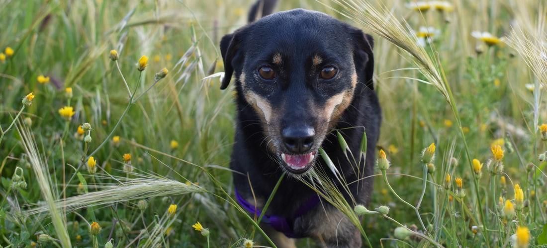 Convivencia con Mascotas: Los Perritos Aprenden Jugando