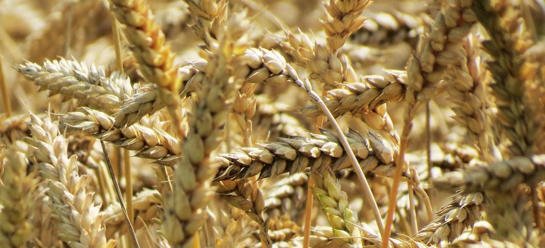 Ecología: Fósforo y Azufre en Trigo-soja-soja