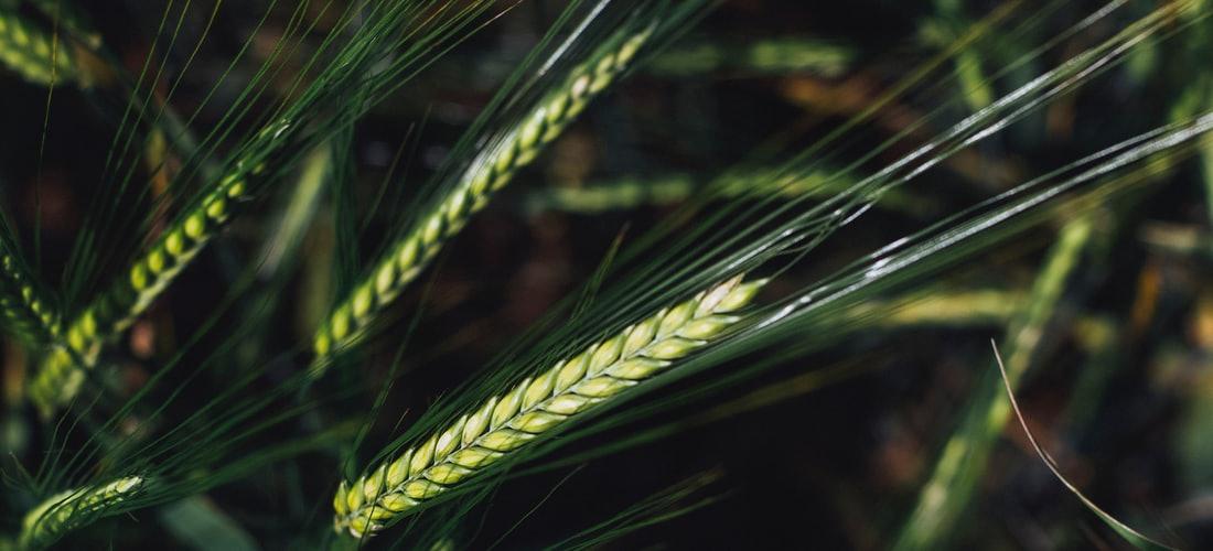 Ecología: Cultivos Orgánicos