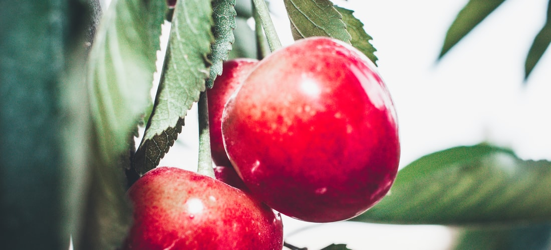 Ecología: Diez Problemas Que Evitamos Desinfectando Alimentos Con Ozonizadores