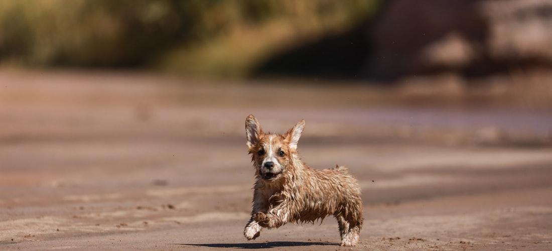 Convivencia con Mascotas: Las Mascotas, Mejores Amigas