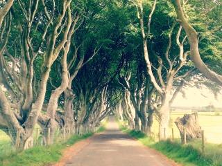 Ballintoy countryside scenery