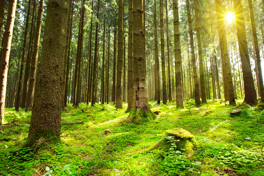 Can't see the woods for the trees? | www ...
