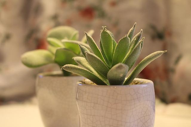 planta para tu escritorio