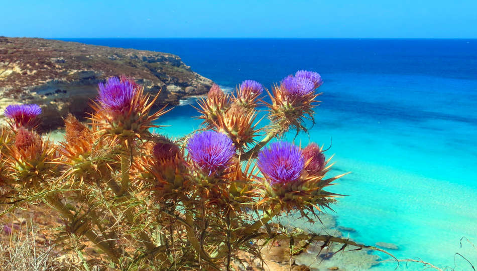 Offerte Lampedusa