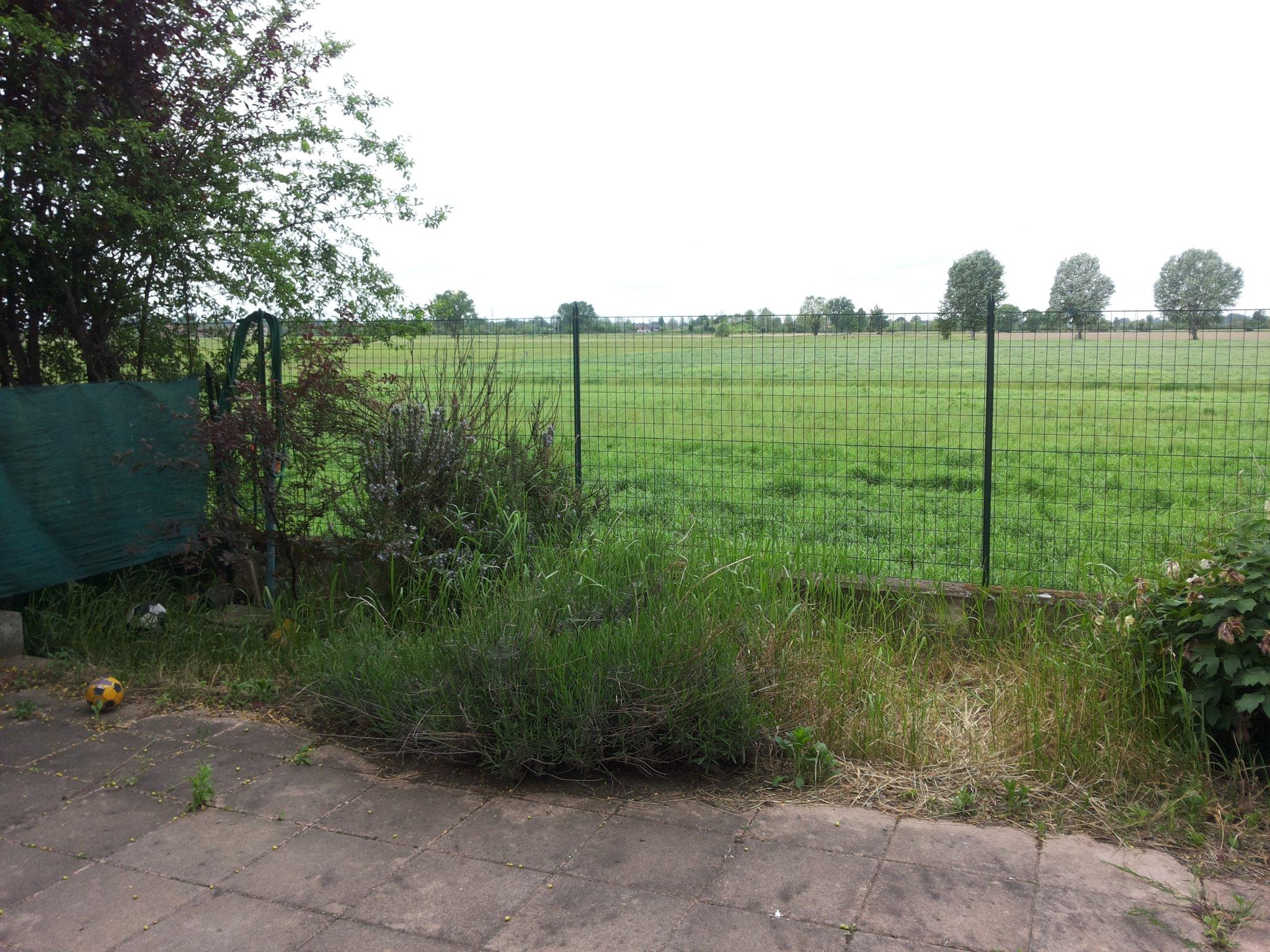 Potatura e rimozione albero e sistemazione piccolo for Albero per piccolo giardino