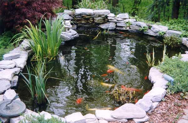 Aanleg vijver met waterval stukje terras bestraten for Peces para estanques de jardin