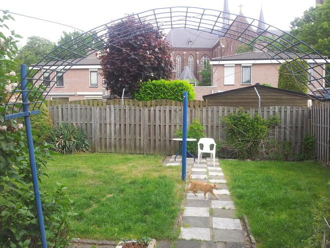 Tuin Afzetten Kat : Afzetten tuin voor mijn kat werkspot