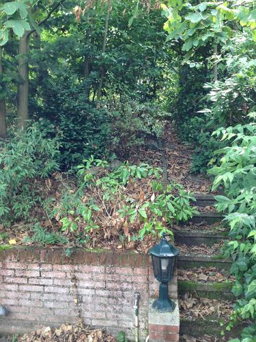 Onderhoud aan tuin incl aanleggen brede stenen trap for Trap tuin aanleggen