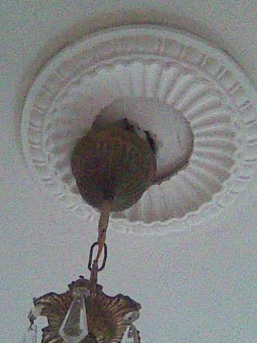 plaatsen gips rozet om hanglamp werkspot