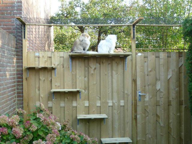Tuin Afzetten Kat : Tuin afzetten kat