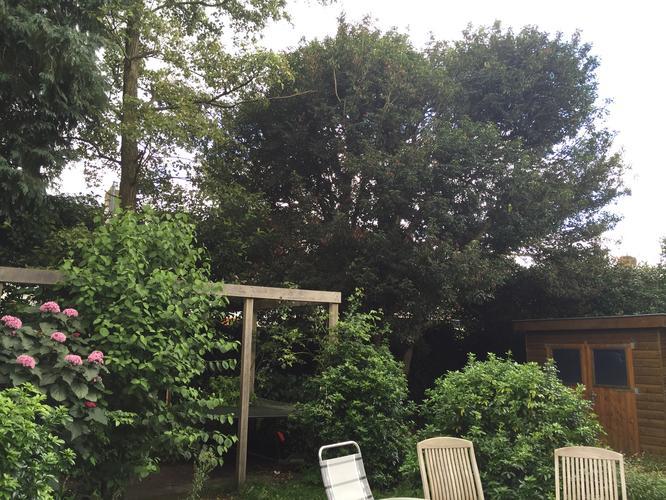 Tuin snoeien laurier leibomen takken grote boom for Tuin snoeien