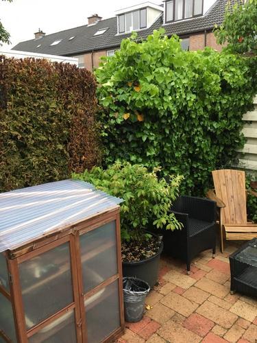 Coniferen en schutting verwijderen werkspot for Grensafscheiding tuin