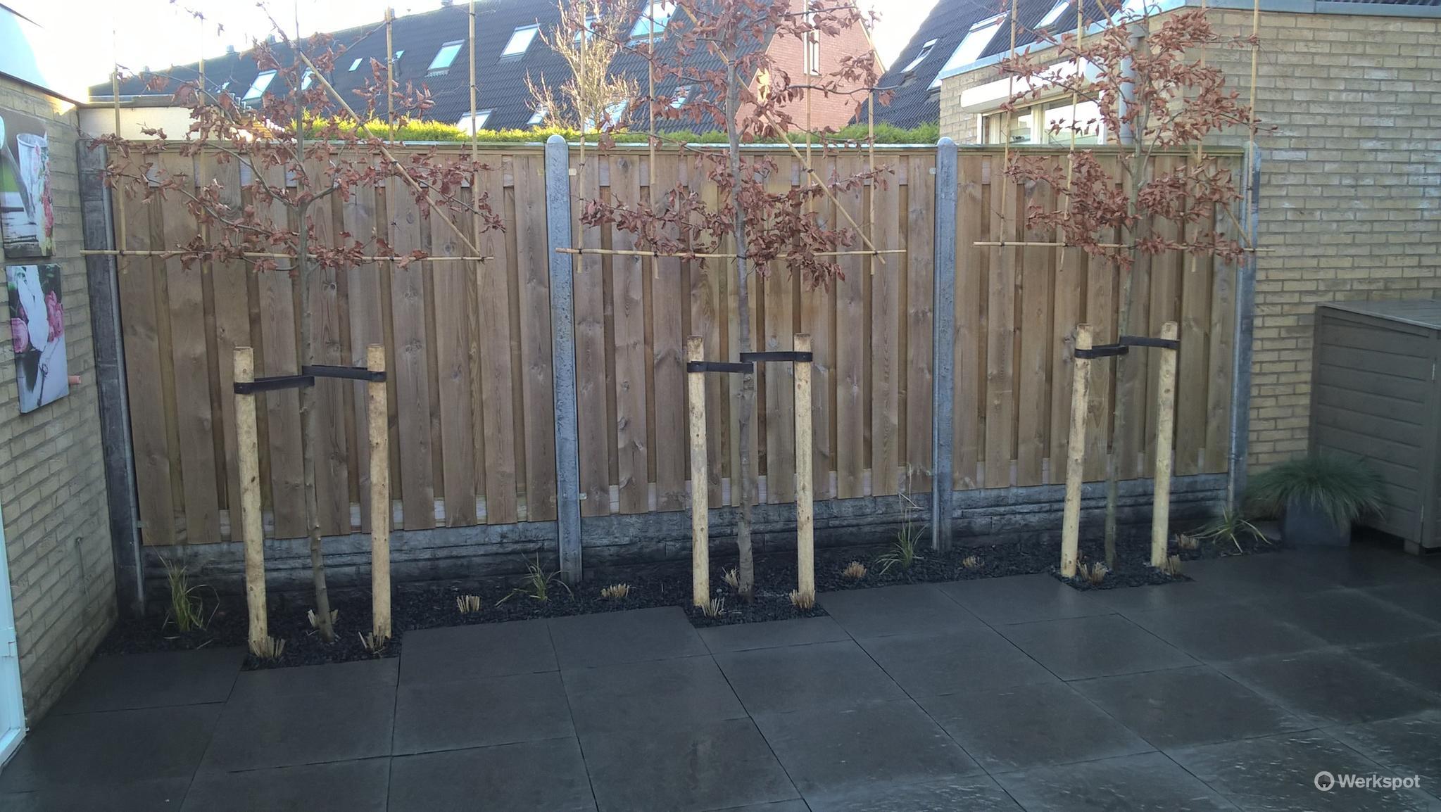 Bomen Op Erfgrens.Verplaatsen Schuttingen Op Erfgrens En Planten Van 3 Lei Bomen