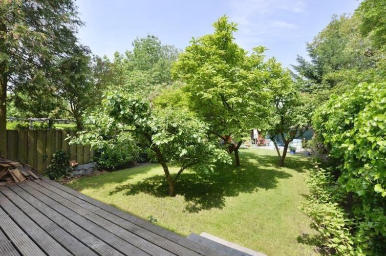 Opknappen van de tuin fruitbomen en hortensia snoeien for Tuin snoeien