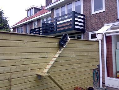 Kattentrap maken van 1 hoog naar tuin beneden werkspot for Beneden tuin
