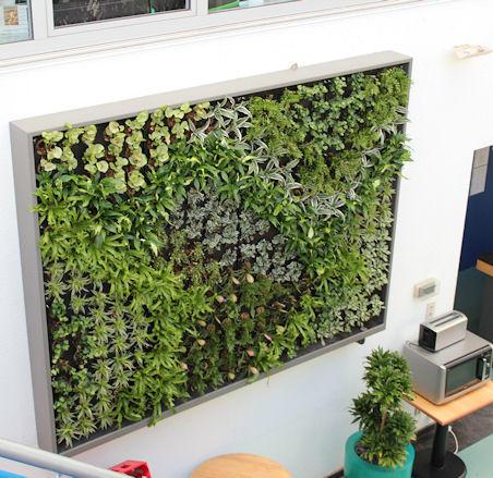 Ontwerp en aanleg verticale tuin op dakterras werkspot for Tuinontwerper gezocht
