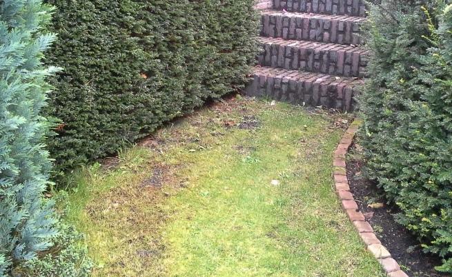 Voorkeur Gras vervangen door stenen - Werkspot AQ14