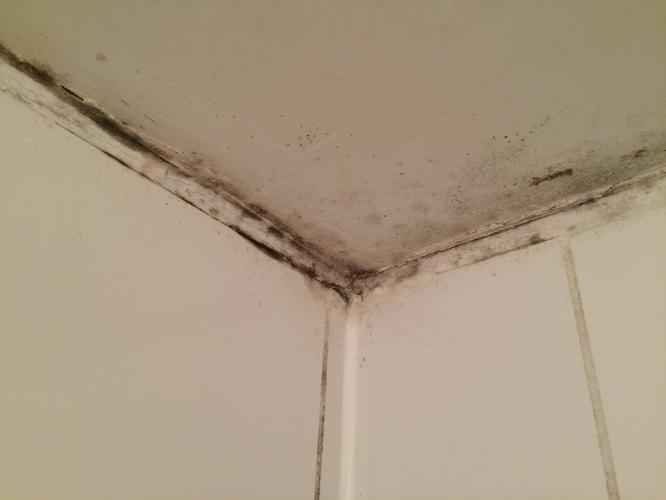 Schimmel in badkamer verwijderen en verlaagd plafond met ...