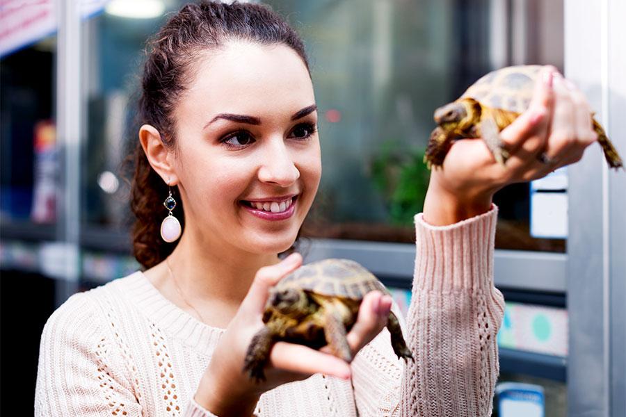 Ile kosztuje żółw i jego utrzymanie?