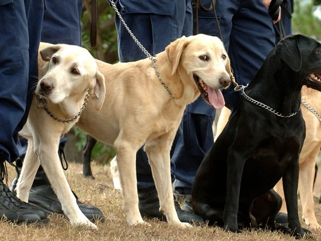 Sniffer dogs at stage left: the NSW government's war on festivals