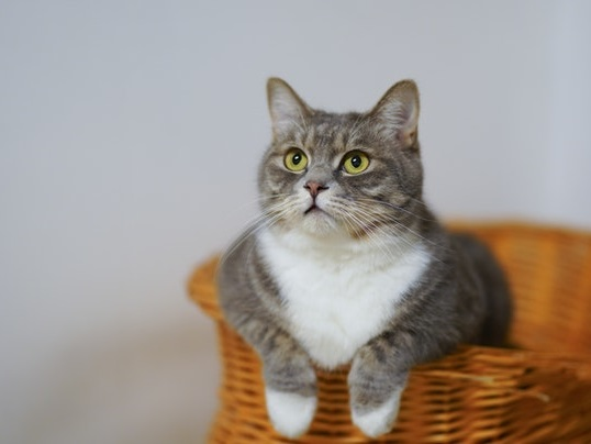 Getting Your First Cat? Here's How to Take Care of Your Little Bundle of Joy