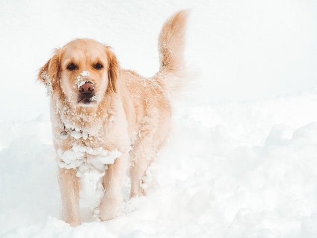 Snow and Ice Caught in Your Dog's Fur? Here's What Vets Say You Should Do