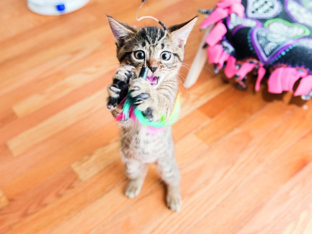 """The """"Cats on Catnip"""" Photographer's New Book Teaches You How to Take Photos of Your Cat"""