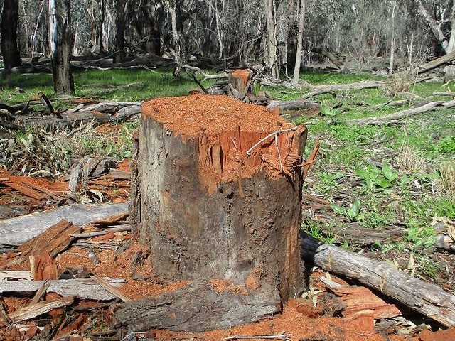 Firewood thieves put on notice