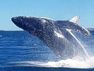Tourists blown away by first whale sighting of the season