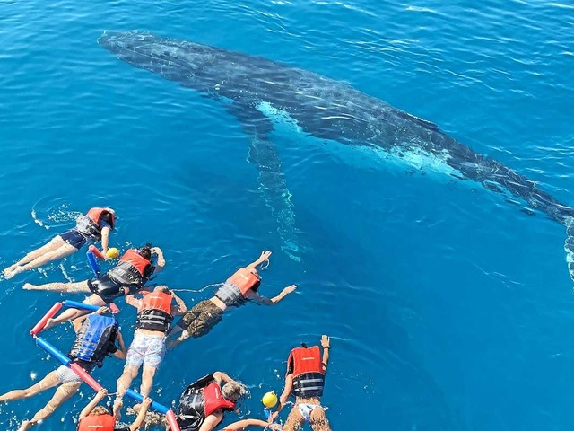 DIVE IN: Why now is the perfect time to swim with whales