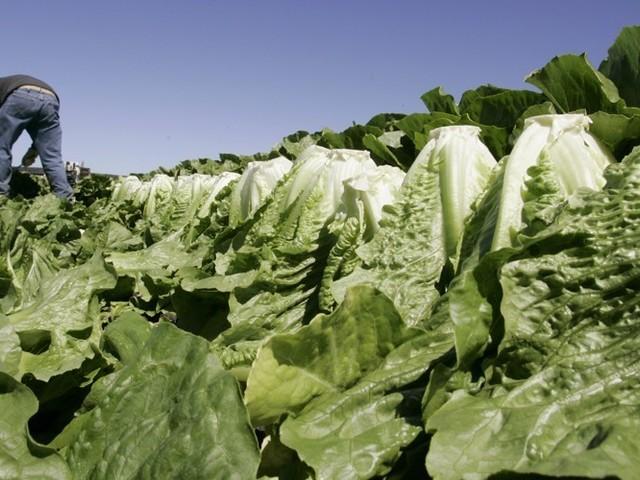 Salad Panic