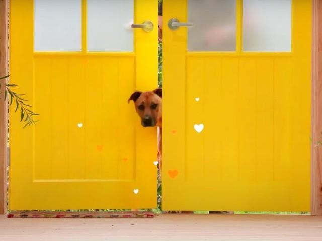 Dog House Australia: promo