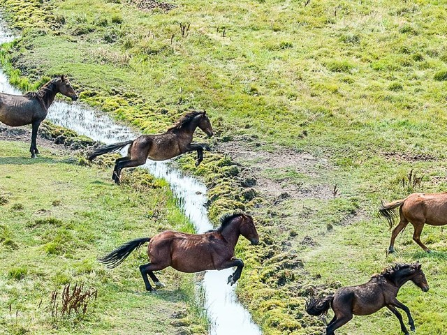 New feral horse count for Aussie alps