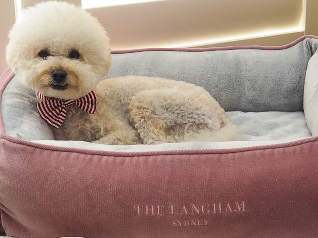 A Pampered Pet Stay At The Langham, Sydney