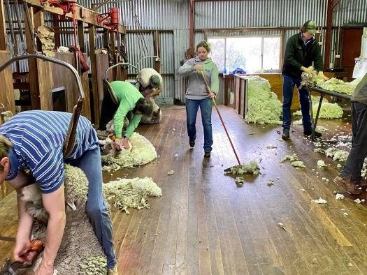 Wool market down 40 per cent on last year